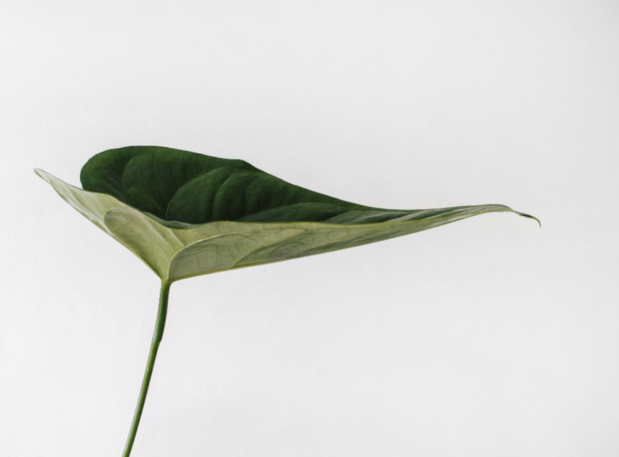 blad op witte achtergrond